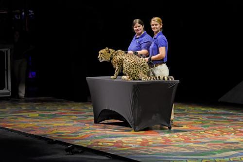 Cheetah 007