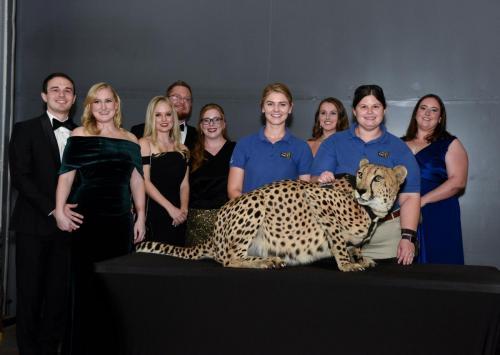 Cheetah 086