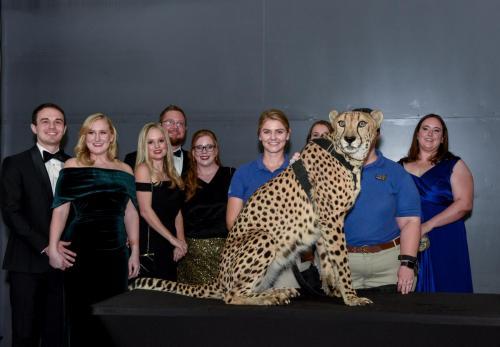 Cheetah 087