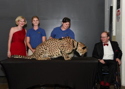 Cheetah 088