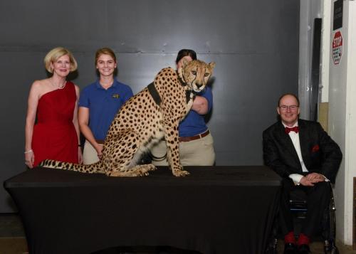 Cheetah 091
