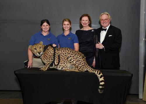 Cheetah 098
