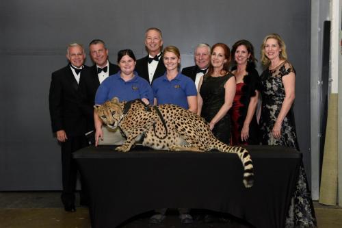 Cheetah 101