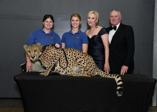 Cheetah 104